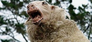 sheepbites3
