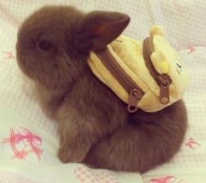 bunnybackpack