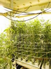 pot grow 2